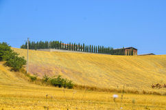 与柏树的托斯卡纳风景 免版税库存照片