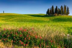 与柏树的美妙的托斯卡纳风景在锡耶纳,意大利,欧洲附近 库存照片