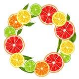 与柑橘水果切片的框架 柠檬石灰葡萄柚和桔子的混合 库存照片