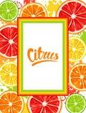 与柑橘水果切片的框架 柠檬石灰葡萄柚和桔子的混合 免版税图库摄影