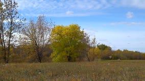 与染黄的叶子的树在秋天草甸 及早秋天 股票录像