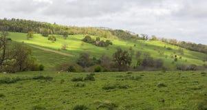 与柔和的小山和吃草绵羊的Cotswolds风景 免版税库存照片