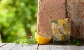 与柠檬切片的酒精鸡尾酒和杜松分支 免版税库存图片