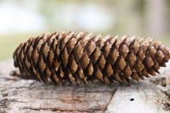 与标度纹理的树锥体 图库摄影