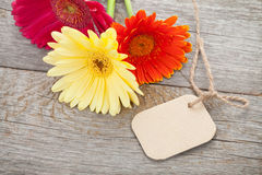 与标记的三朵五颜六色的大丁草花 库存图片