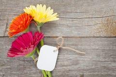 与标记的三朵五颜六色的大丁草花 库存照片