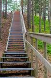 与栏杆的向上楼梯在松柏科木材 免版税库存照片