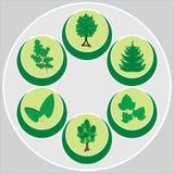 与树、杉木、叶子和花的环境标志 图库摄影