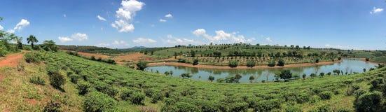 与树、河和蓝天的美丽的景色夏令时 库存照片