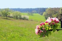 与树、草甸和一个分支的春天风景用苹果bl 免版税库存图片
