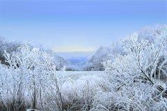 与树、领域和冻植物的有薄雾的冬天风景 免版税库存图片