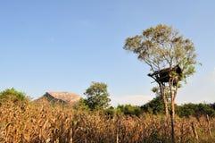 与树上小屋的Pidurungala岩石在斯里兰卡 免版税库存照片
