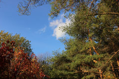 与树上面的背景 库存照片