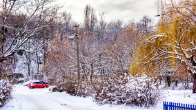与树与黄色干燥秋叶和雪地毯的第一个雪风景在汽车、树和草在公园 秋天 免版税库存图片