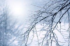 与树冰和雪秋天的光秃的分支 库存图片