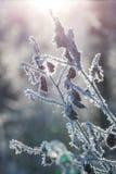 与树冰的分支 免版税库存照片