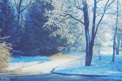 与树冰的树在土路附近的分支 免版税图库摄影