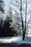 与树冰的树在土路附近的分支 图库摄影