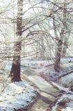 与树冰的树在土路附近的分支 库存照片