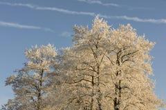 与树冰的树梢反对天空在一个结冰的冷的冬日 库存图片