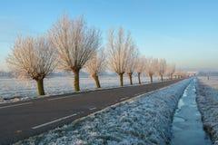 与树冰的树 免版税图库摄影