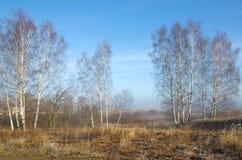 与树冰的秋天风景 免版税图库摄影