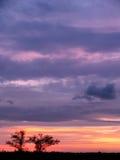 与树剪影的剧烈的多云日落天空 免版税库存照片