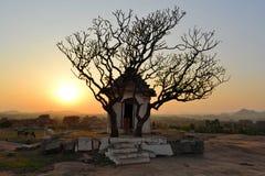 与树剪影的古老废墟在日落 库存照片