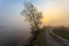 与树剪影的有雾的风景 免版税库存图片