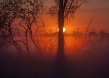 与树剪影的有雾的风景 图库摄影