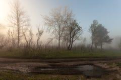 与树剪影的有雾的风景 库存图片