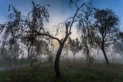 与树剪影的有雾的风景 免版税库存照片