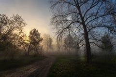 与树剪影的有雾的风景 库存照片