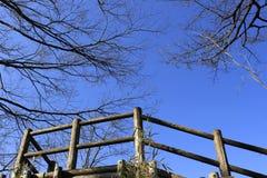 与树剪影的蓝天  免版税库存图片