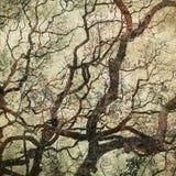 与树剪影的难看的东西背景 免版税库存照片