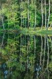 与树反射的夏天风景在湖 免版税库存图片