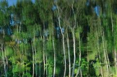 与树反射的夏天风景在湖 库存照片