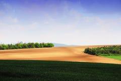 与树和云彩的春天小山 免版税库存图片