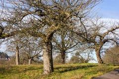 与树和云彩的12月蓝天在接近风暴前 免版税库存照片