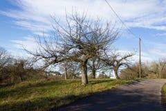 与树和云彩的12月蓝天在接近风暴前 库存图片
