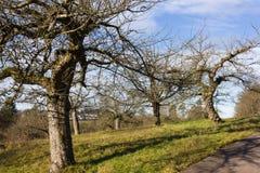 与树和云彩的12月蓝天在接近风暴前 图库摄影