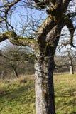 与树和云彩的12月蓝天在接近风暴前 免版税图库摄影
