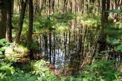 与树和反射的沼泽 免版税图库摄影