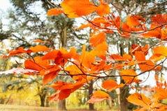 与树和叶子分支的秋天集合  Parc阿斯特丽德 免版税图库摄影