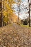 与树和叶子的秋天路在地板上 库存照片