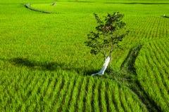 与树和小径的米领域 免版税库存照片