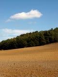 与树和明亮的蓝天的农业风景 免版税库存照片