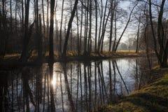 与树和易北河的老河胳膊的自然风景在日落的 图库摄影