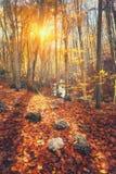 与树和桔子叶子的五颜六色的秋天风景 山 图库摄影