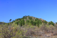 与树和植被的小山 免版税图库摄影